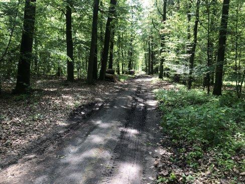 Cichowo - spacery po lesie